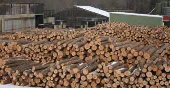 January export receipts on forest products grow 83.2%